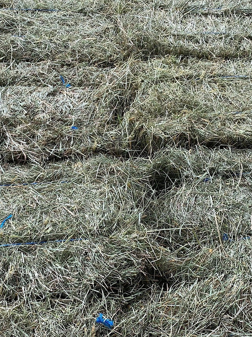 1st Cutting Local Grass Hay - 2-String Square