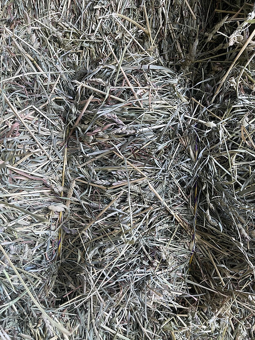 Orchard Grass - Priced per bale