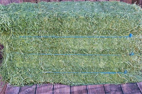 Alfalfa 3rd Cutting - 3-String Square