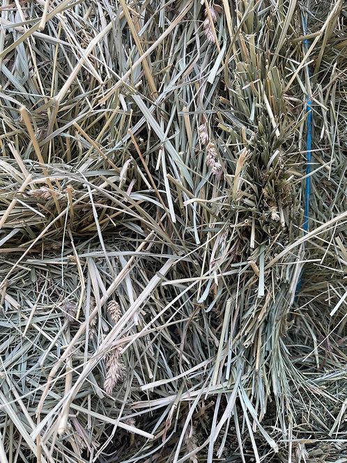 Premium 2nd Cutting Orchard Grass- Priced per Ton