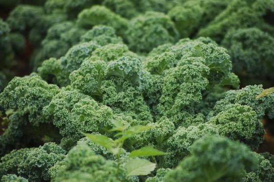 Kale_Square.jpg
