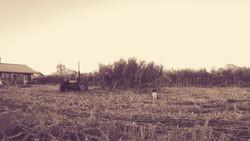 Tractor+Cat_Sepia.jpg