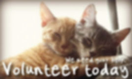 volunteer with the kenora cat shelter