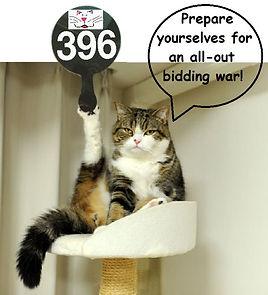cat bidding.jpg