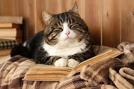 cat with book.jfif