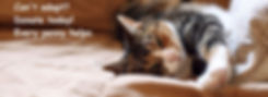 kenora cat shelter cat donation