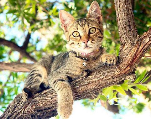 kenora cat shelter lost cat