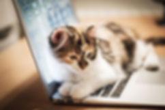 kenora cat shelter contact us cat