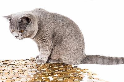kenora cat shelter donation jars and change