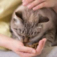 kenora cat shelter cat sponsor