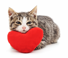 cat with heart.webp