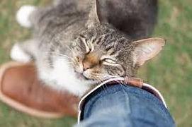 kenora cat shelter found cat