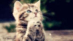 kenora cat shelter wish list kitten