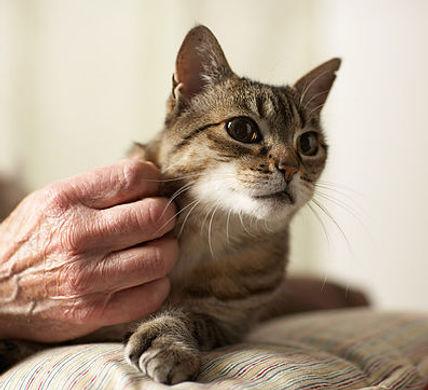 kenora cat shelter cat