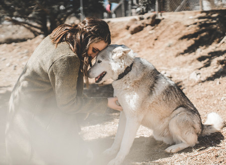 A Visit to the U.S. Wolf Refuge