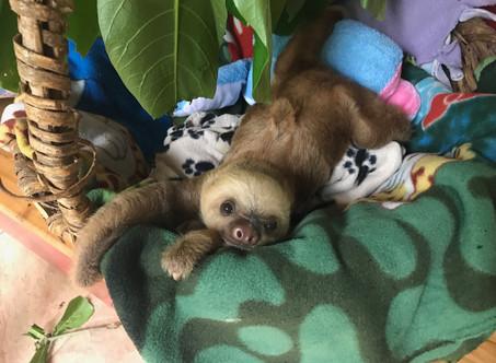 3 Reasons to Visit the Jaguar Rescue Center
