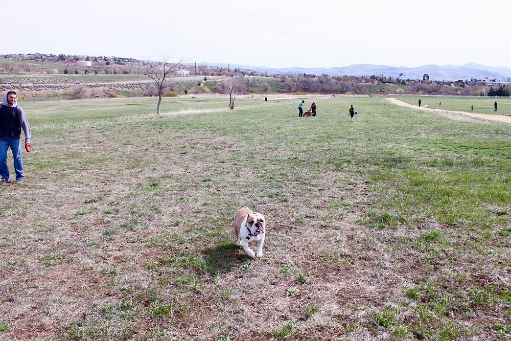 Escape Reno: Rancho San Rafael Dog Park