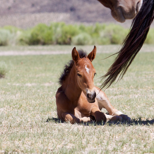 A tiny colt! So many laid in their mom's shadows.
