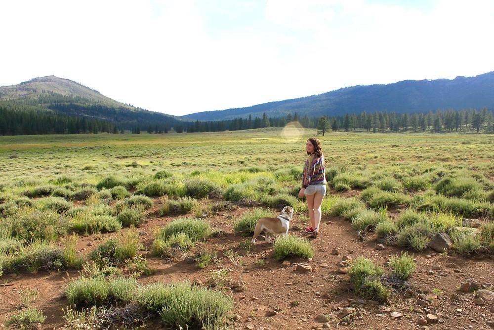Escape Reno: Dog Valley