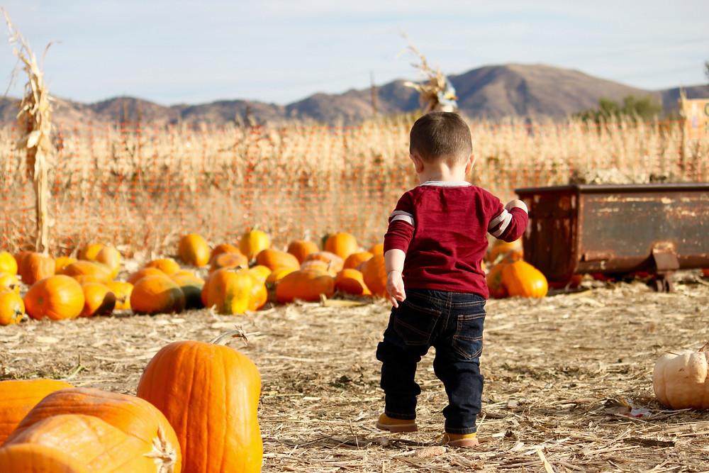 Escape Reno: Pumpkin Patch