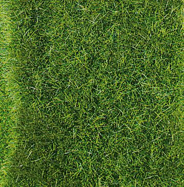 Heki 1577 - Erba selvatica, verde scuro