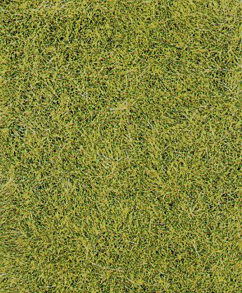 Heki 1855 - Manto decorativo di erba selvatica, verde