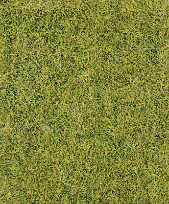 Heki 1575 - Erba selvatica, verde prato