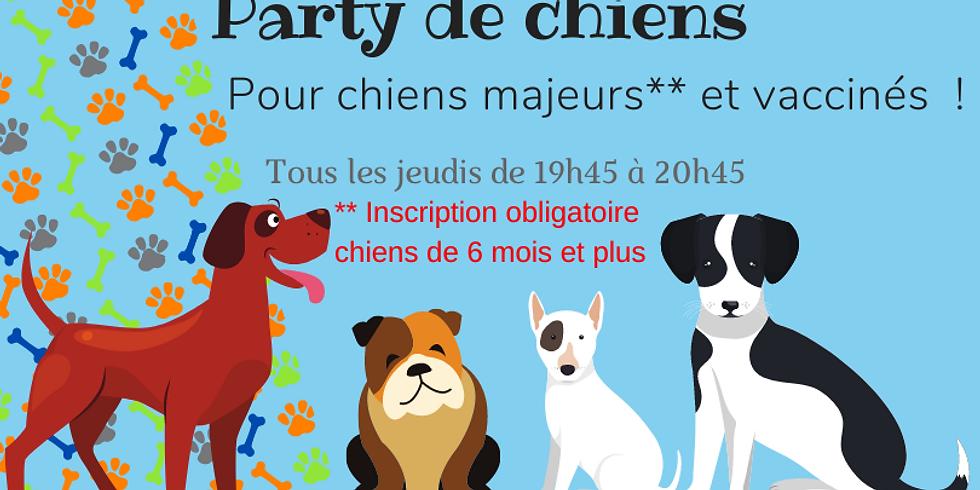 Party de chiens  le Jeudi 2 septembre 19h45