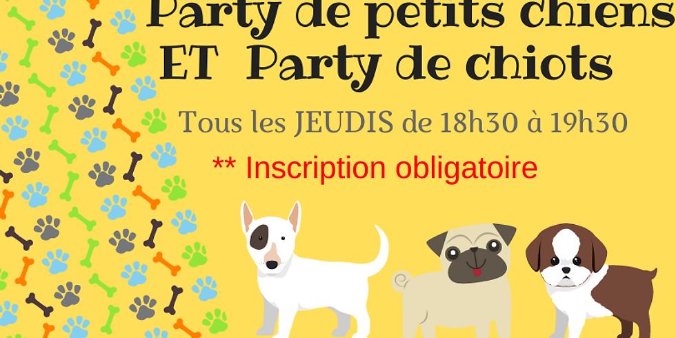 Party de petits chiens et de chiots le jeudi 16 septembre 18h30