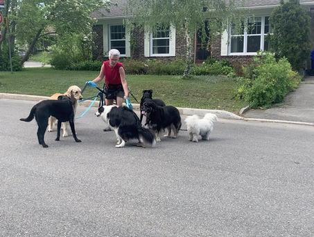 Comment ramasser un caca 💩 avec 7 chiens