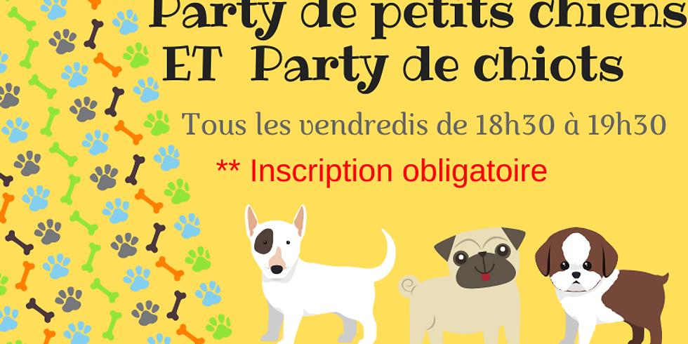 Party de petits chiens et de chiots le VENDREDI 24 septembre 18h30