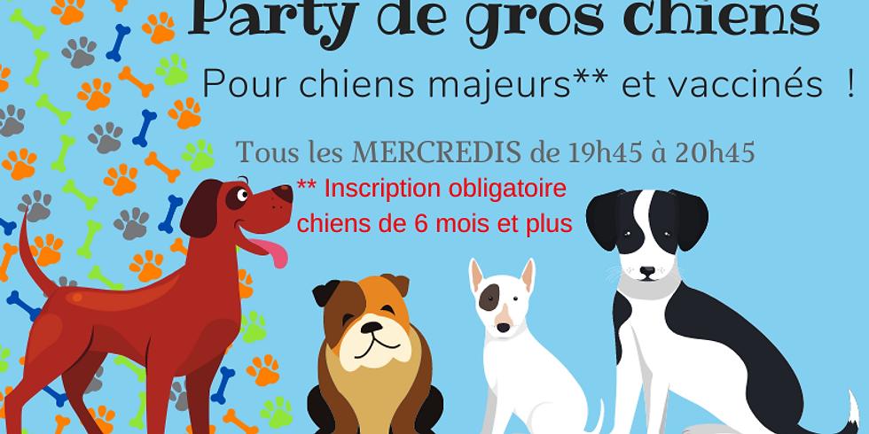 Party de gros chiens  30 septembre