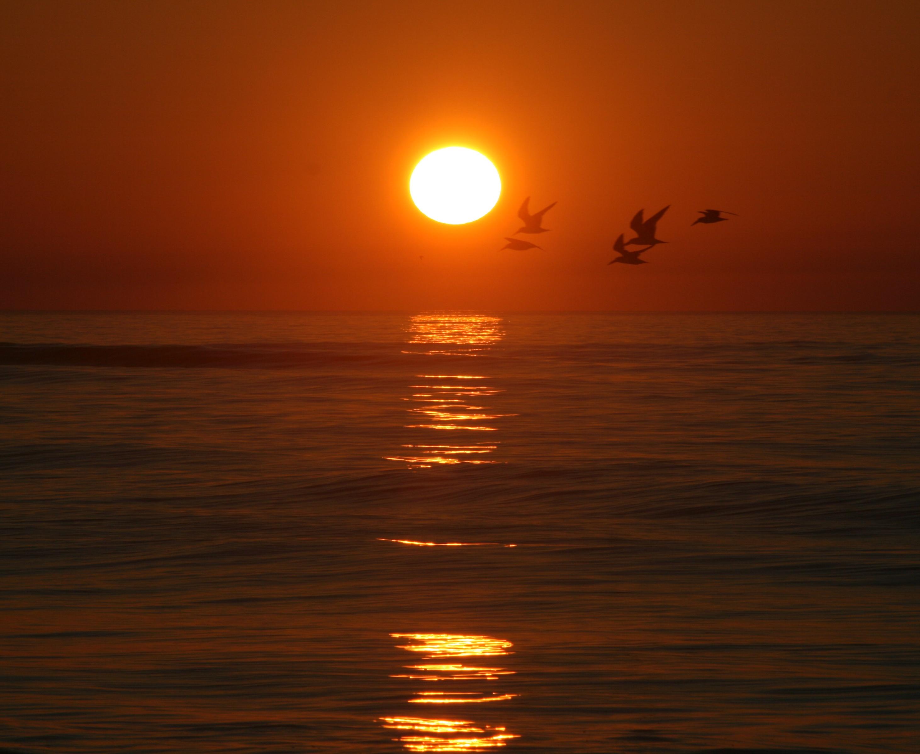 Golden Isles Sunrise