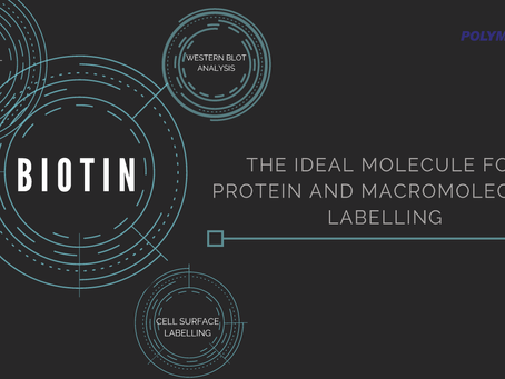 Biotin - The Ideal Molecule for Protein and Macromolecules Labelling