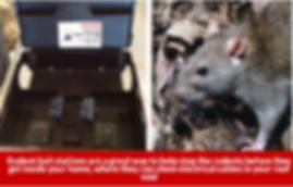 rodent bait