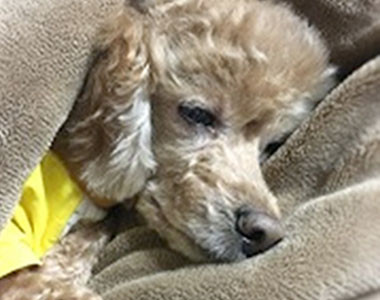 'Farewell to Cookie,' Ludia's Story