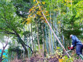 竹林の間伐作業