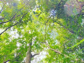 木陰で感じる夏の涼