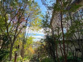 雑木の庭 ビフォーアフター