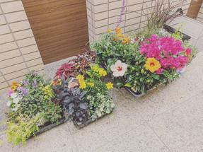 暮らしに合わせた植物の楽しみ方