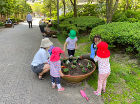 花の植え替え