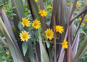 植物の夏バテ対策