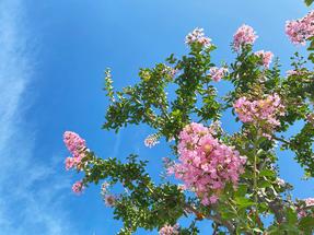 夏に元気な花