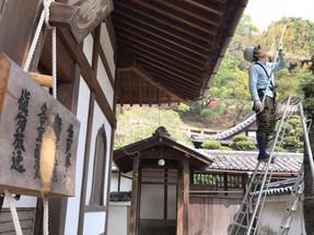 禅寺様で剪定工事