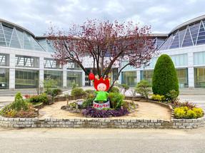 夢の家フェスティバル 花壇づくりにチャレンジ