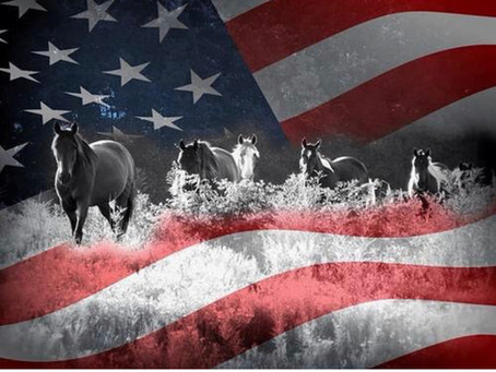 Happy 4th of July! Take time to honor and appreciate your freedom today!