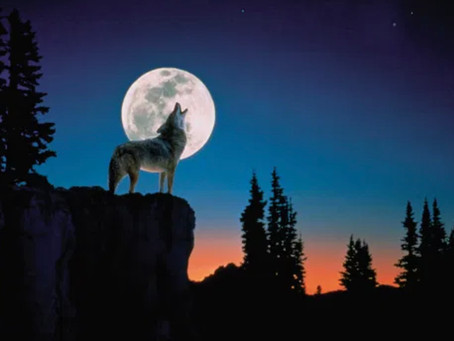 January's Wolf Moon -> The New is calling