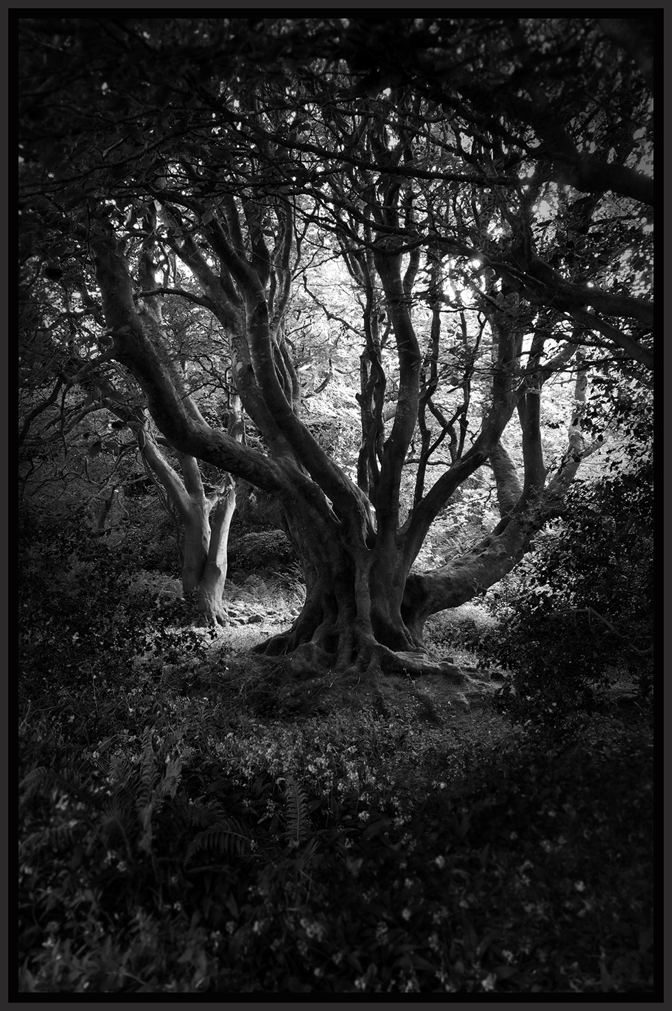 'Dark Tree' by Stan Mathers ( 9 marks )
