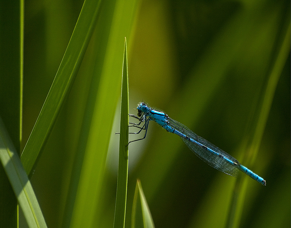 'Blue among green' by G Cassidy ( 10 marks )