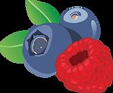 fruit2.png